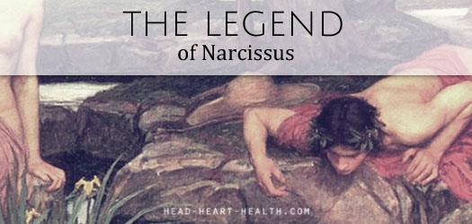 narcissus T
