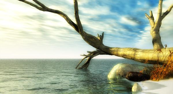 old tree beach