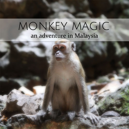 monkey magic in malaysia