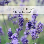 The Birthday • planting lavender